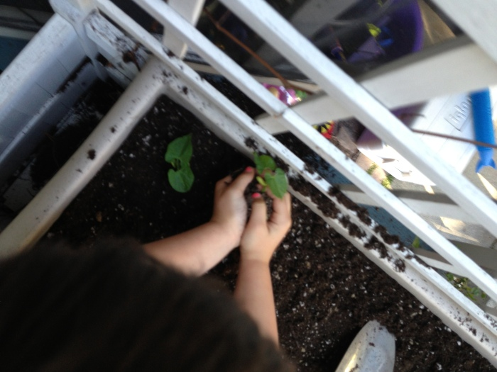 Planting our sprouts