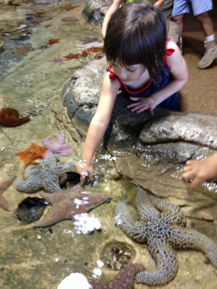 Touch Tanks, Elise's favorite!
